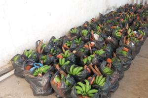 CPT e famílias camponesas distribuem alimentos saudáveis em Alagoinha, PB