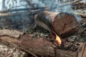 Com 12 mil focos de incêndio, desmatamento avança no Cerrado durante a pandemia